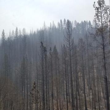 CA Wildfires, Aug 2018