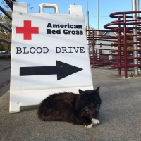 Otto blood drive